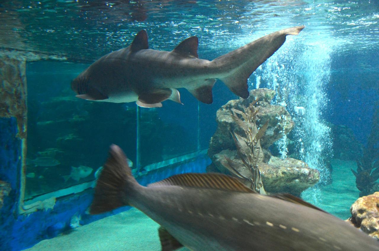 Groß - Aquarium Epoxidharz