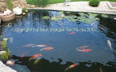 Koiteich_Bayern_Teutoburger_Teichbau_2011